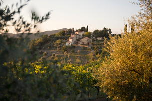 Italy, Tuscany, Dicomano, Remote houses with vineyard in foreground at sunsetの写真素材 [FYI02704676]