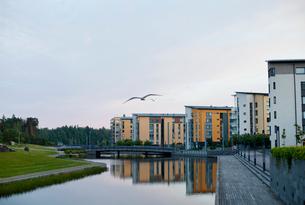 Finland, Uusimaa, Helsinki, Vuosaari, Flying birds against residential buildings along canal at duskの写真素材 [FYI02704682]