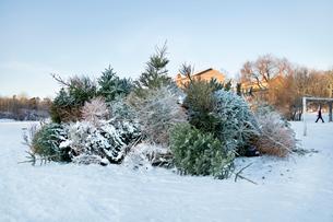 Sweden, Sodermanland, Johanneshov, Nytorps Garde, Heap of old Christmas treesの写真素材 [FYI02704690]
