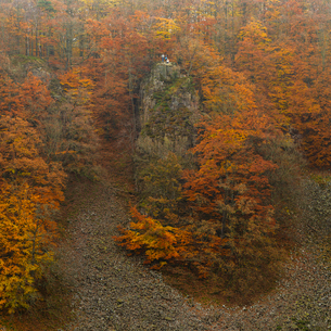 Sweden, Skane, Soderasens National Park, Cliff and forestの写真素材 [FYI02704718]