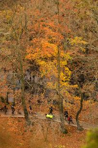 Sweden, Skane, Soderasens National Park, Pedestrian walkway in forestの写真素材 [FYI02704722]