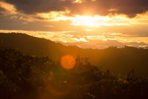 Italy, Tuscany, Dicomano, Landscape of vineyard at sunsetの写真素材 [FYI02704732]