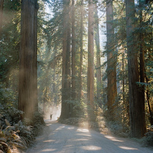 USA, California, Jedediah Smith Redwood State Park, Man on footpath in sequoia forestの写真素材 [FYI02704751]