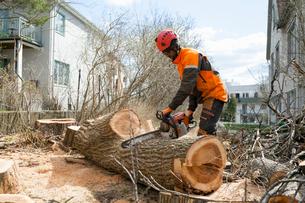 Sweden, Sodermanland, Arborist cutting logの写真素材 [FYI02704796]