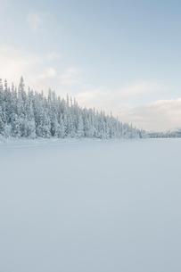 Sweden, Lappland, Jokkmokk, Forest by frozen lakeの写真素材 [FYI02704845]