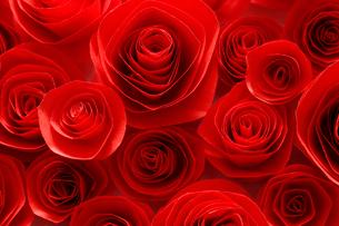 Roseの写真素材 [FYI02704885]