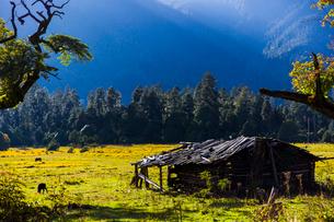 Nanyi valley in Tibet, Chinaの写真素材 [FYI02705049]