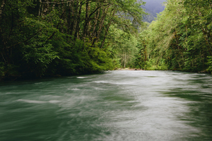 Dosewallips River and lush, green temperate rainforestの写真素材 [FYI02705183]