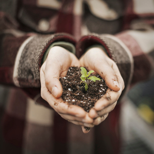 A person holding a small plant seedling in soilの写真素材 [FYI02705191]