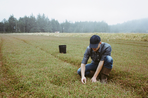 A cranberry farm. A young man working on the land.の写真素材 [FYI02705264]