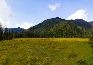 Nanyi valley in Tibet, Chinaの写真素材 [FYI02705323]