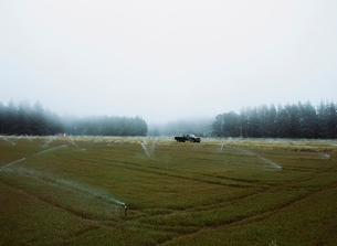 A cranberry farm in Massachusetts. Field full of crops.の写真素材 [FYI02705340]
