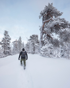 Rear view of man walking in snow in Fulufjallet National Park, Swedenの写真素材 [FYI02705440]