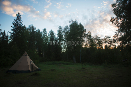 Tent by trees at sunset in Vasterbotten, Swedenの写真素材 [FYI02705550]