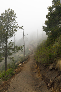 Foggy hiking trail in Acatenango, Guatemalaの写真素材 [FYI02705565]