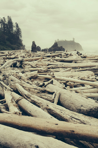 View of coastline from Ruby Beach, piles of driftwood in the foreground. Olympic National park.の写真素材 [FYI02705591]
