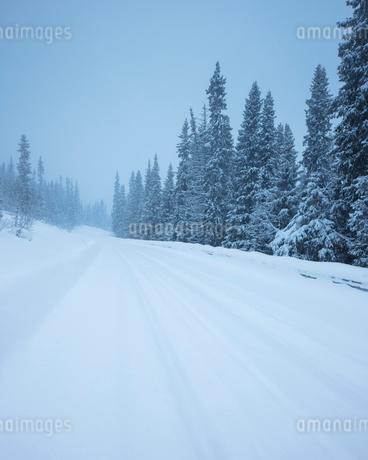Rural road during winter in Fulufjallet National Park, Swedenの写真素材 [FYI02705678]