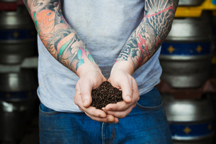 Close up of man standing in a brewery, holding some dark brown malt, tattooed arms.の写真素材 [FYI02705934]