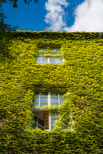 Sweden, Stockholm, Ostermalm, Creeper plant growing on wall of Kungliga Tekniska hogskolan (Royal Inの写真素材 [FYI02706047]