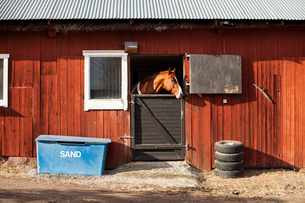 Sweden, Uppland, Faringso, Horse locked in stableの写真素材 [FYI02706129]