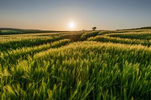 Rural landscape with view across fields of crops near Slapton, Devon at sunset.の写真素材 [FYI02706135]