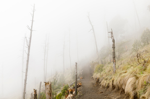 Foggy hiking trail in Acatenango, Guatemalaの写真素材 [FYI02706143]