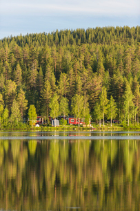 Forest by a river in Vasterbotten, Swedenの写真素材 [FYI02706259]