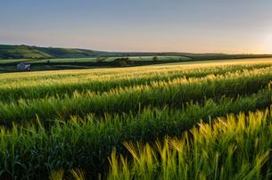 Rural landscape with view across fields of crops near Slapton, Devon.の写真素材 [FYI02706305]