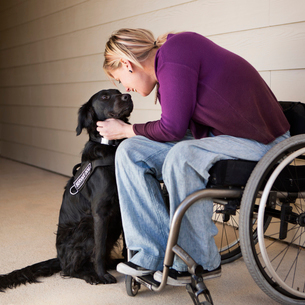 A mature woman wheelchair user stroking her black Labrador service dog and making eye contact with tの写真素材 [FYI02706328]