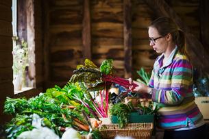 A woman handling organic produce in a farm shop.の写真素材 [FYI02706576]
