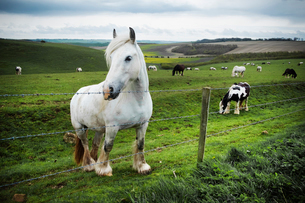 A group of horses grazing on the grass on the open chalk downlands.の写真素材 [FYI02706595]