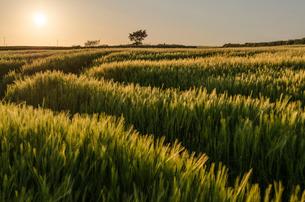 Rural landscape with view across fields of crops near Slapton, Devon at sunset.の写真素材 [FYI02706668]