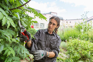 A woman pruning bushes in a gardenの写真素材 [FYI02706791]