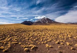 Andean Plain, Puna Grasland, Jarava ichu, Volcan Miniquesの写真素材 [FYI02707008]