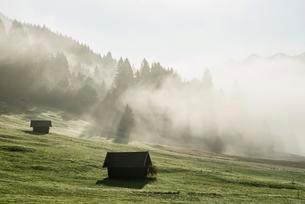 Sunrise and morning mist, meadow, Geroldsee orの写真素材 [FYI02707064]