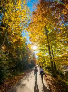 Sun shines through colorfully autumn leaves, two strollersの写真素材 [FYI02707066]