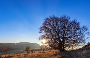 Sun goes down behind a tree at Mont Saleve, autumnの写真素材 [FYI02707070]