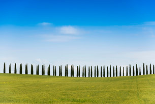 Line of cypress trees, near San Quirico d'Orcia, Valの写真素材 [FYI02707083]