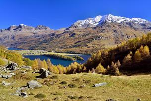 Views of Lake Sils and Piz Corvatsch in autumnal Upperの写真素材 [FYI02707134]