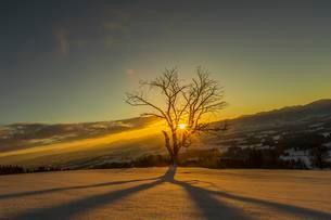 Sun shines through bare tree in winter, sunrise behindの写真素材 [FYI02707136]