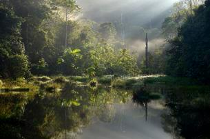 Small lake in the morning light, Amazon rainforest betweenの写真素材 [FYI02707142]