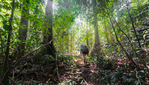Hikers, man walking on a footpath through the jungle, Kualaの写真素材 [FYI02707145]