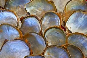 Shells of pearl oysters with pearl on the shell insideの写真素材 [FYI02707151]