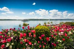 Seaside promenade with tulip beds, uberlingen, Lakeの写真素材 [FYI02707176]