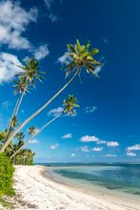 Sandy beach with palm trees and turquoise water, Rarotongaの写真素材 [FYI02707259]