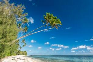 Sandy beach with palm trees and turquoise water, Rarotongaの写真素材 [FYI02707268]