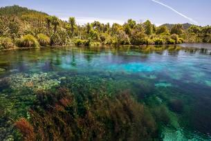 Clear water, central overflow Te Waikoropupu Springs, alsoの写真素材 [FYI02707276]