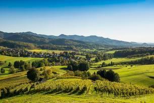 Hilly landscape with vineyards, Hexental, near Freiburg imの写真素材 [FYI02707288]