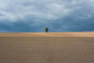 Single Tree, agricultural landscape, Thuringia, Germanyの写真素材 [FYI02707336]