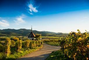 olbergkapelle between vineyards, Ehrenstettenの写真素材 [FYI02707376]